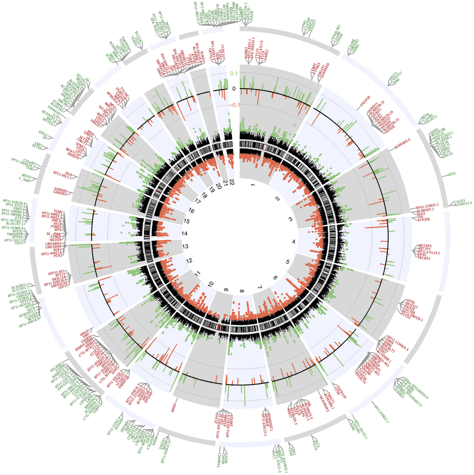 A circular plot of the genome compares methylation patterns in people with MS to those of normal controls. MS genomes show changes in the methylation of immune response genes and those promoting oligodendrocyte survival, among others. Reprinted by permission from Macmillan Publishers Ltd: <em>Nature Neuroscience</em> (Huynh <em>et al.</em>, copyright 2013)