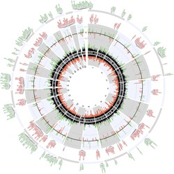 A circular plot of the genome compares methylation patterns in people with MS to those of normal controls. MS genomes show changes in the methylation of immune response genes and those promoting oligodendrocyte survival, among others. (Click on image for larger version.) Reprinted by permission from Macmillan Publishers Ltd: <em>Nature Neuroscience</em> (Huynh <em>et al.</em>, copyright 2013)